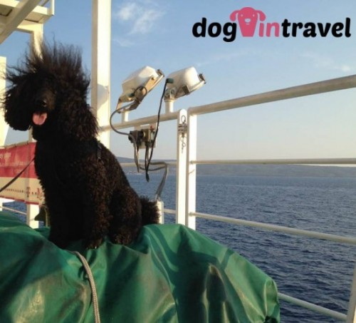 Pan Pies na Chorwacji