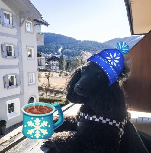 Mr Dog in Dolomites (Italy)
