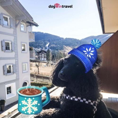 Pan Pies zdobywa Dolomity