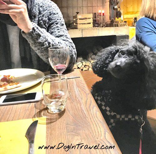 Przepisy: czy Pan Pies może wejść do restauracji?