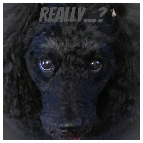 Jak widzi pies?