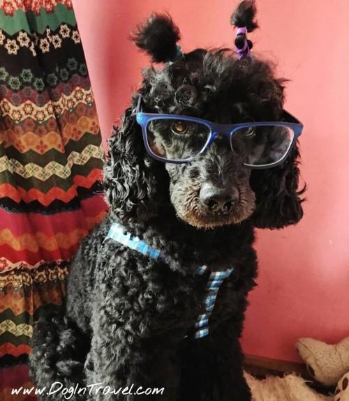 Mr Dog's sight