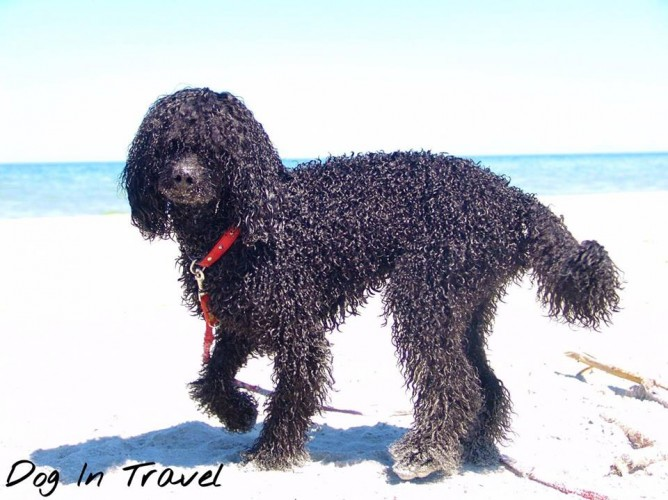 Mr Dog's coat & summer