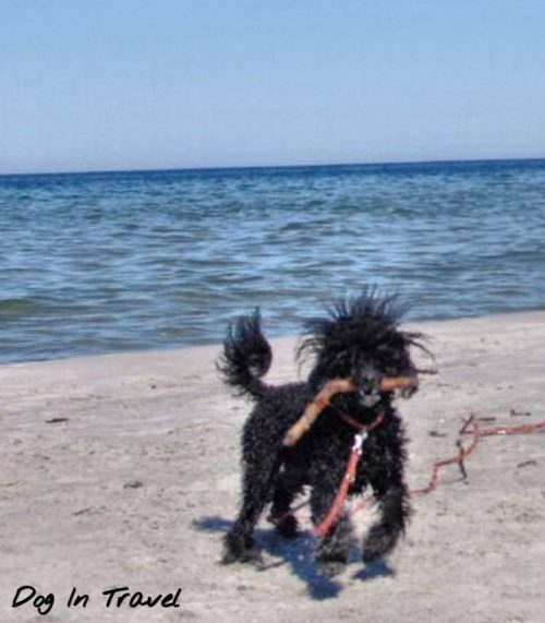 Jak mądrze plażować z psem?