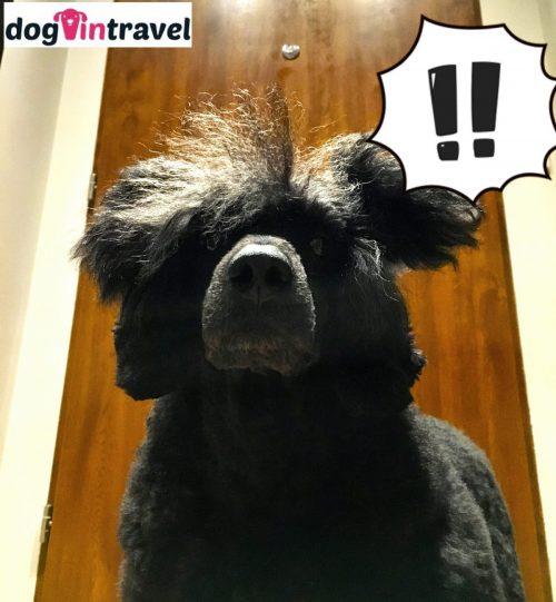 Mr Dog barks at doorbell