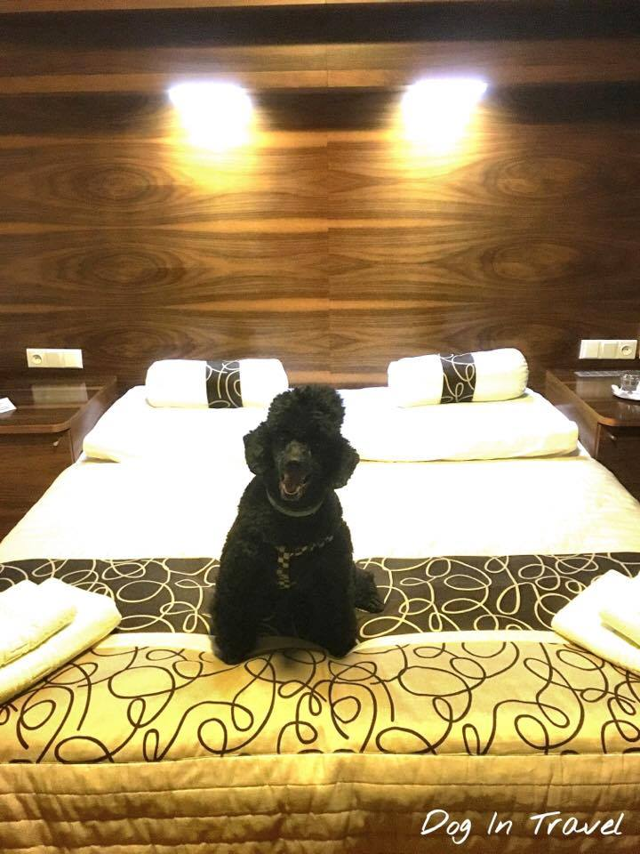 Why some hotels don't accept dogs?