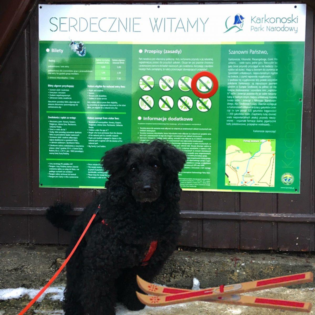 Z psem w parku narodowym