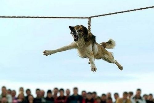 Dog-spinning – barbaric tradition in Bulgaria