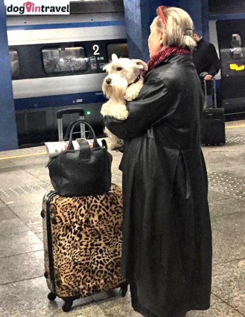 Podróż z psem pociągiem PKP