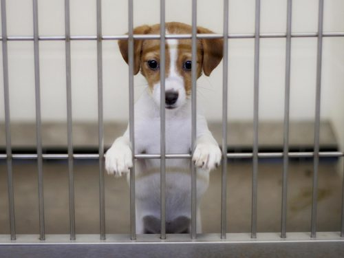 San Francisco BANS selling puppies