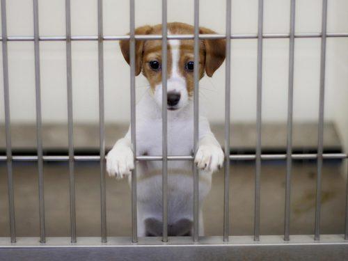San Francisco BANS selling puppies