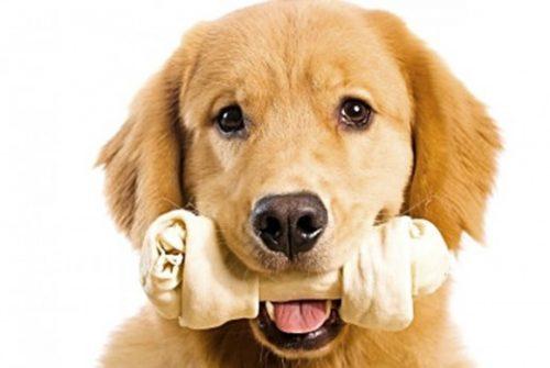 Popularne przysmaki dla psa mogą być toksyczne!