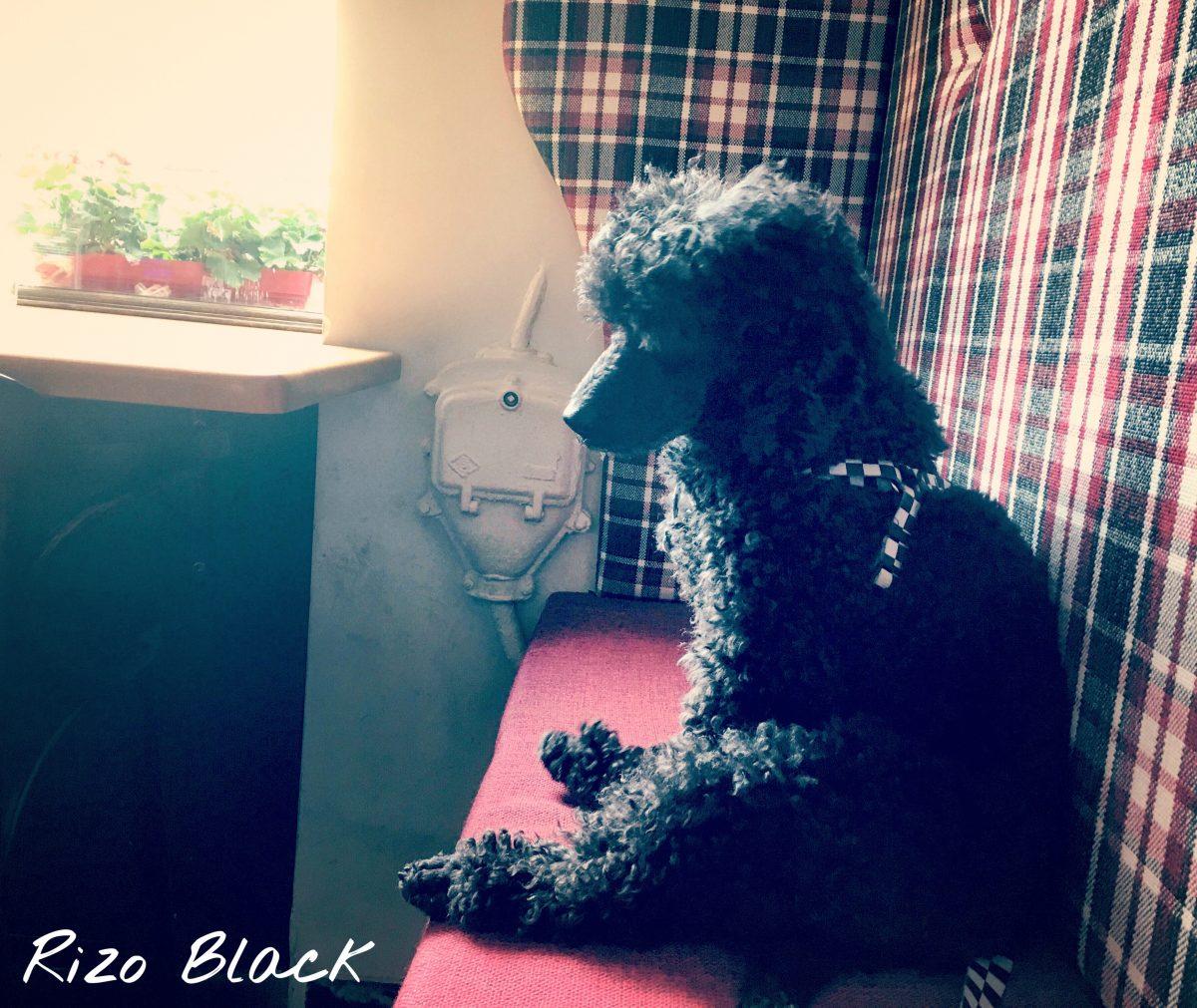 Czym jest psychiczne znęcanie sięnad psem?