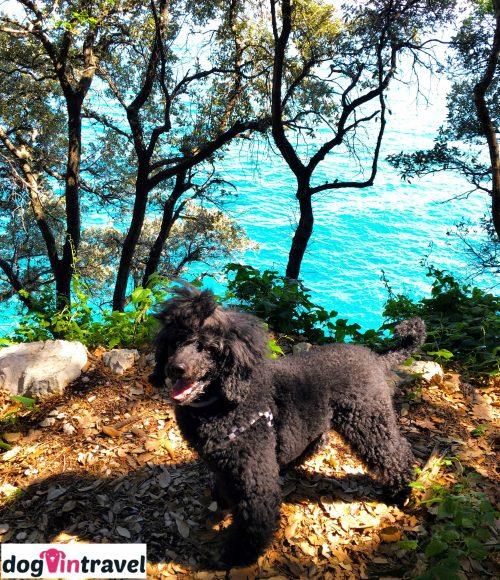 Pan Pies na półwyspie Istria