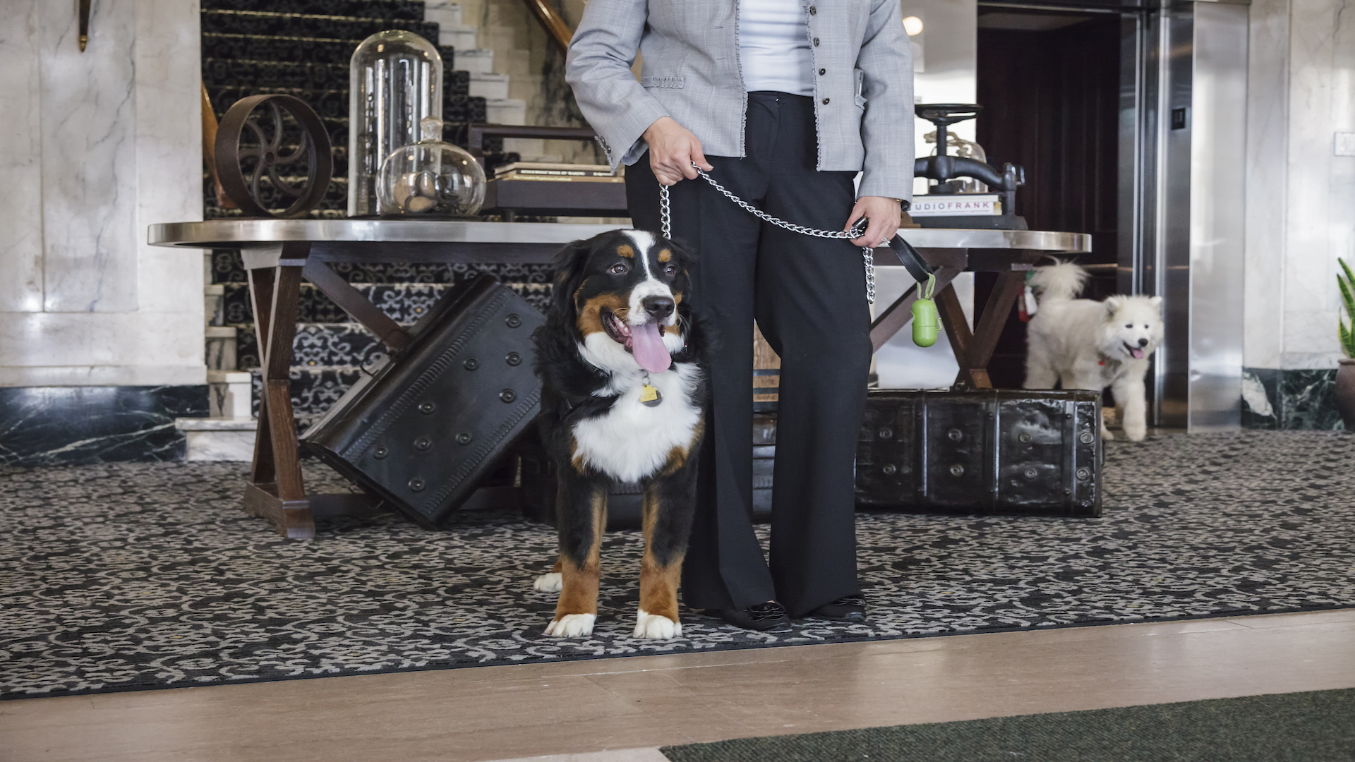super dog friendly hotels in us other hotels learn a lesson