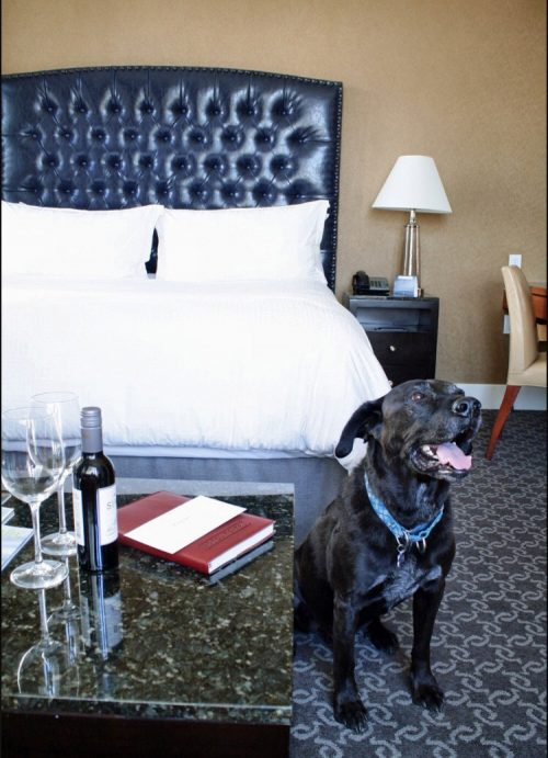 Super dog friendly hotels in US. Other hotels – learn a lesson!