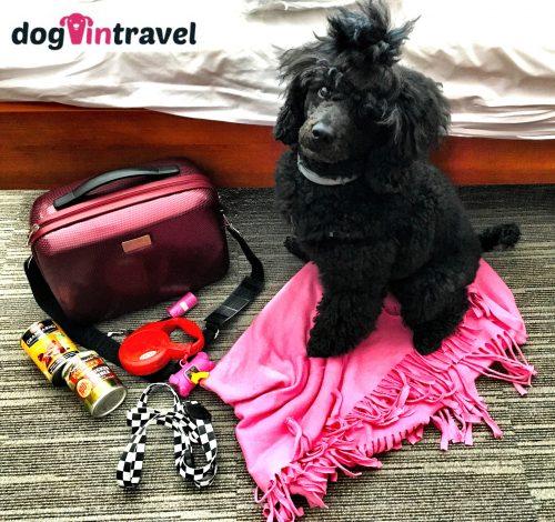 Jak spakować psa na wakacje?