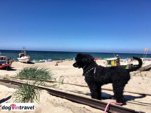 Czy i gdzie można wejść z psem na plażę?