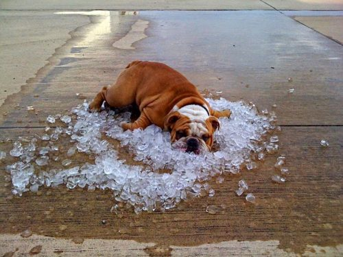Heat stroke in dog: symptoms and protection