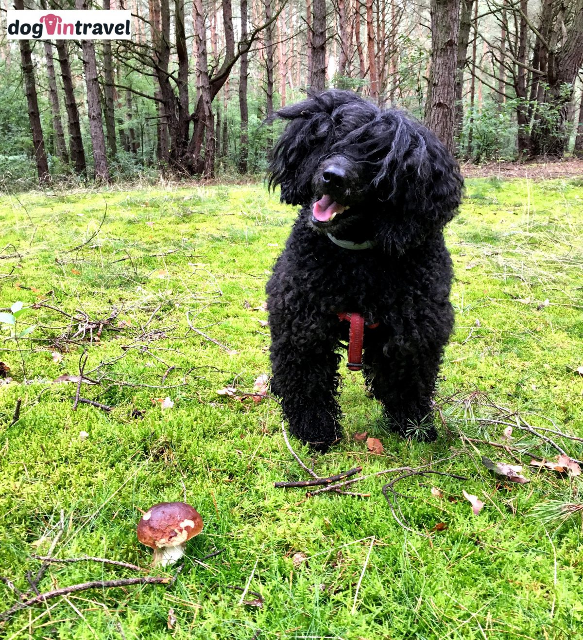 Mr Dog in search for mushrooms?