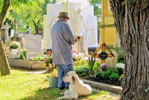Wspólny cmentarz dla ludzi i zwierząt?