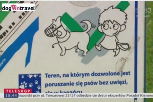 W Poznaniu psy mogą biegać luzem i wejść do urzędu