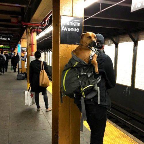Jak przewieźć psa w autobusie i metrze?
