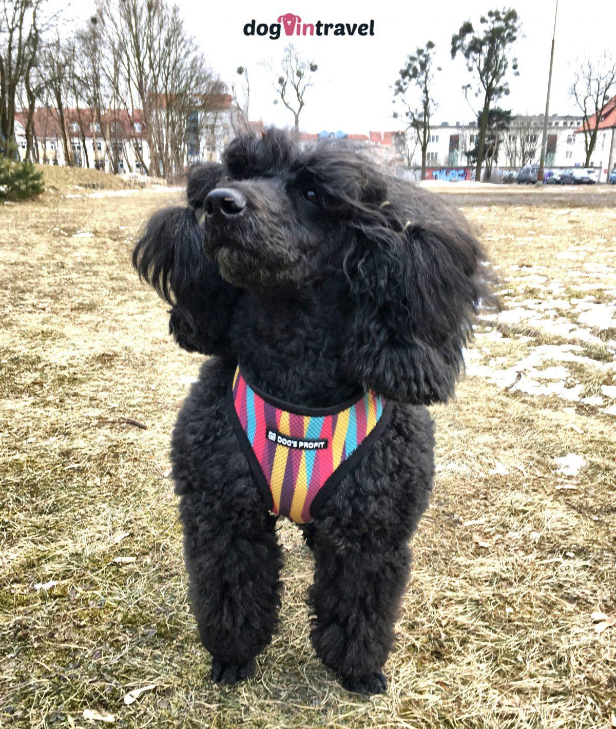 Jakie szelki dla psa wybrać?