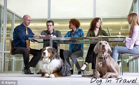 """Z psem do pracy? Akcja w Bydgoszczy """"Pies w biurze""""."""