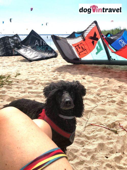 Kite surfing z psem, czyli Chałupy i Zatoka Pucka