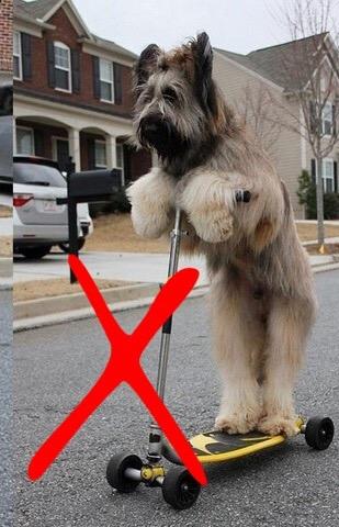 """Czy """"słodkie filmiki"""" z psami naprawdę sąfajne? Gdzie kończy sięnauka a zaczyna znęcanie?"""