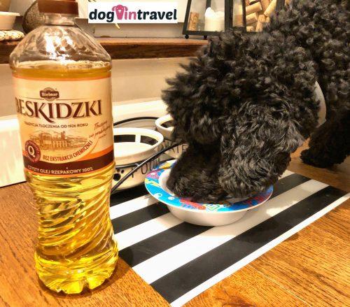 Olej w diecie psa
