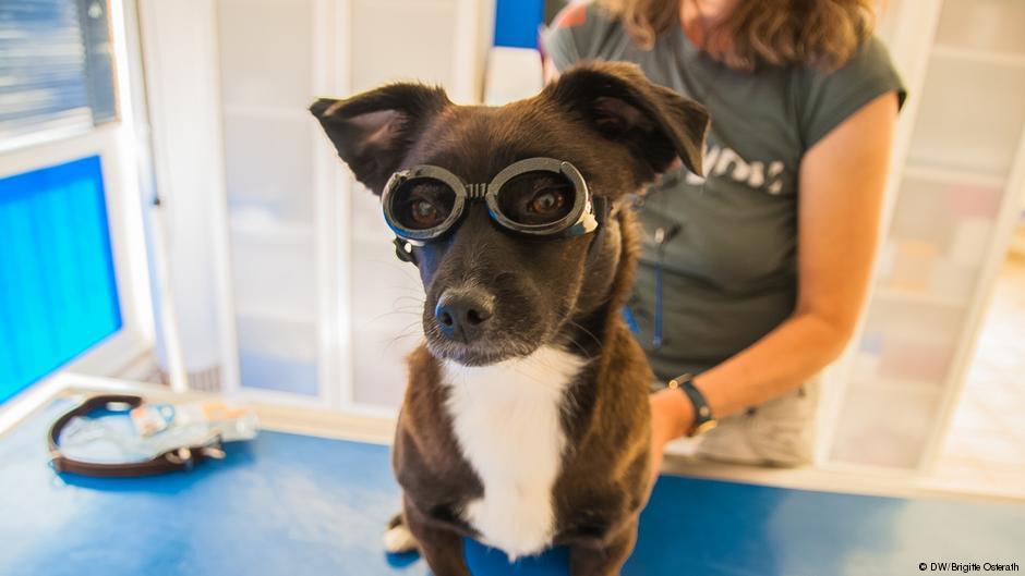 Pies ma słaby wzrok? Sąjużokulary dla psów!